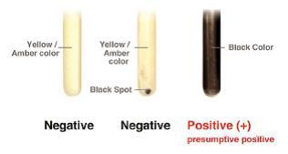 Ecouvillons d'hygiene de surface pour détection de Listéria, 50/pqt